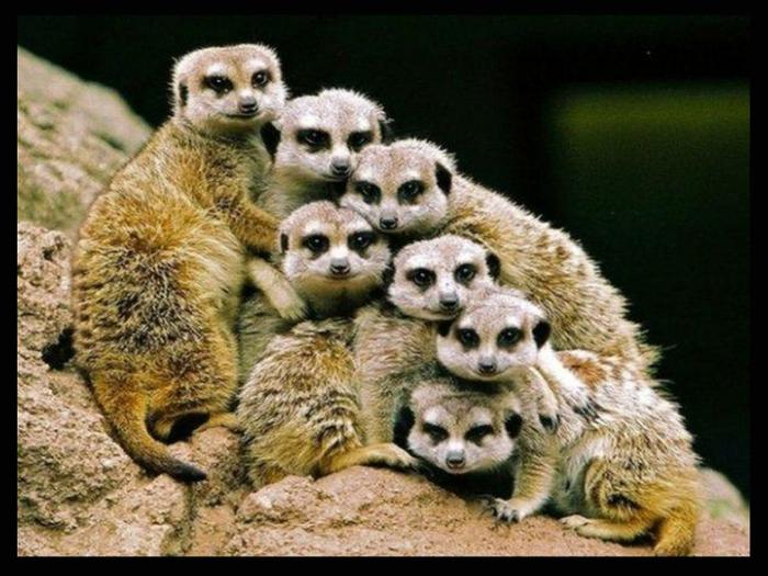 фото животные 8 (700x525, 360Kb)