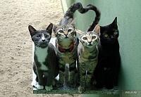 Кошки и Котята 19