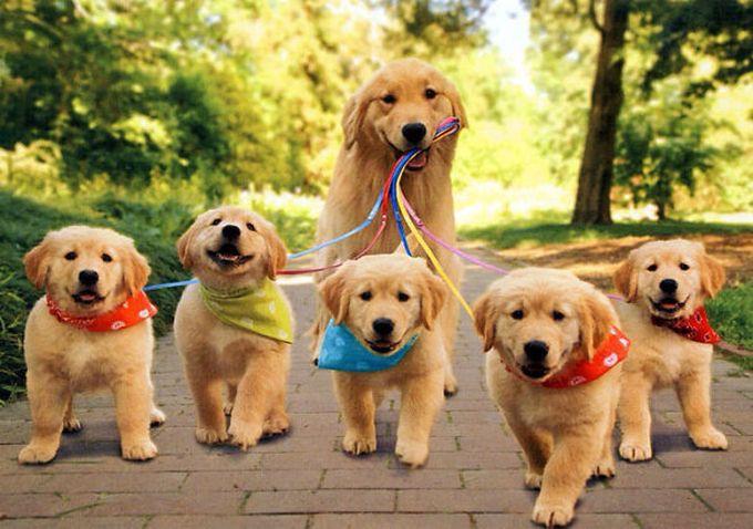 10. На прогулку как на праздник! животные, потомство, собаки