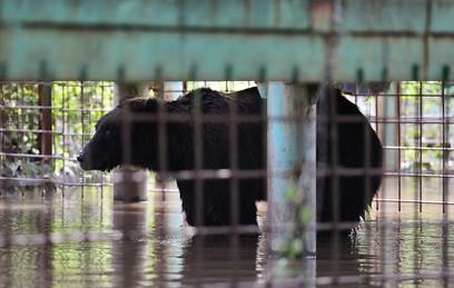 Эвакуацию зверей из зоопарка Уссурийска завершат в среду