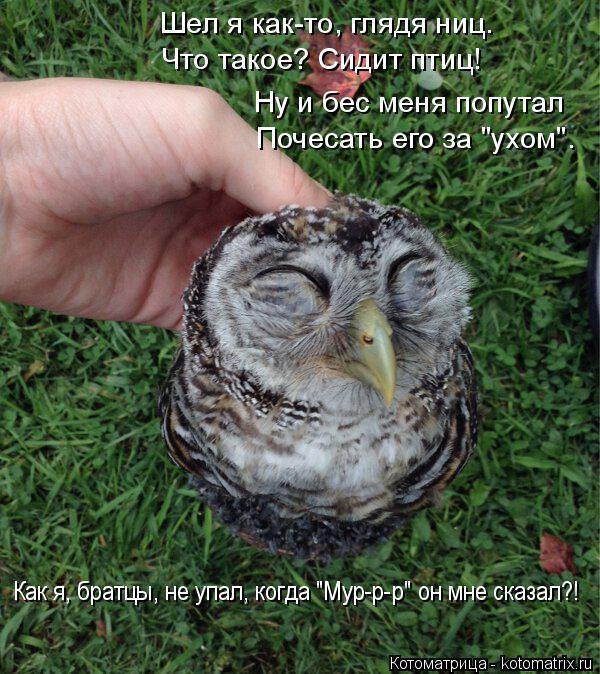 """Котоматрица: Шел я как-то, глядя ниц. Что такое? Сидит птиц! Ну и бес меня попутал Почесать его за """"ухом"""". Как я, братцы, не упал, когда """"Мур-р-р"""" он мне сказал?!"""
