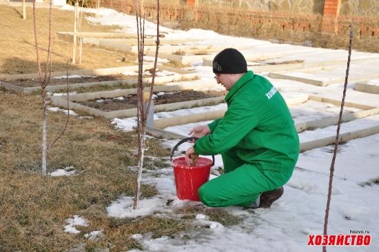 Рецепт зимней побелки для садовых деревьев