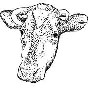 Задать жару: Основы приготовления мяса на открытом огне. Изображение №65.