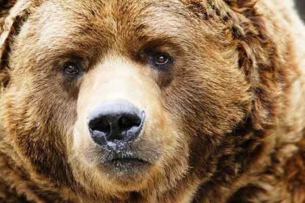 Самый лучший медведь на свете)