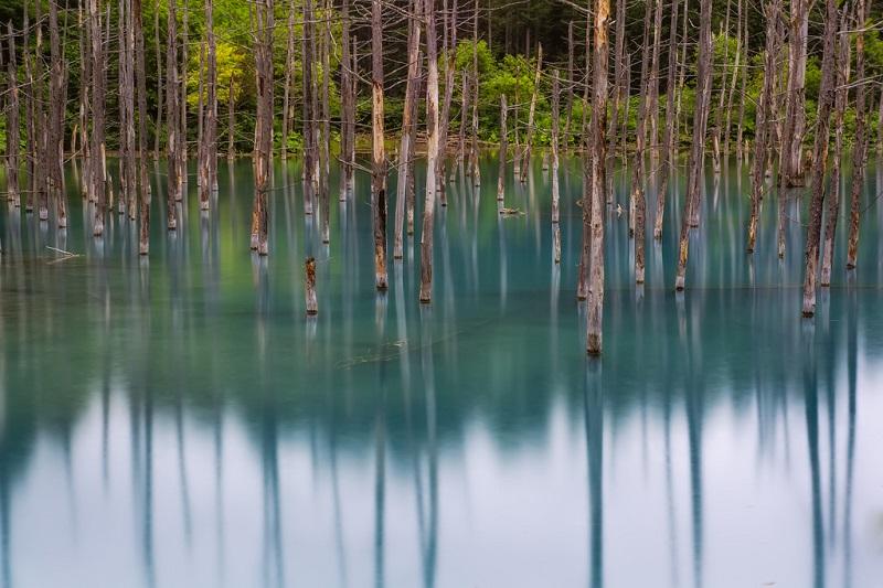 Голубой пруд Биэй. Отражение леса.