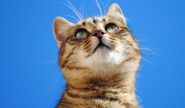 Письмо бездомного кота умершей хозяйке
