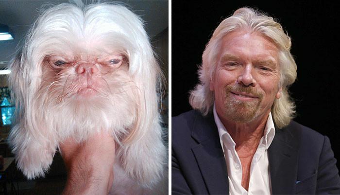 40. Собака двойник Ричарда Брэнсона вещи, люди, похожие лица, схожесть