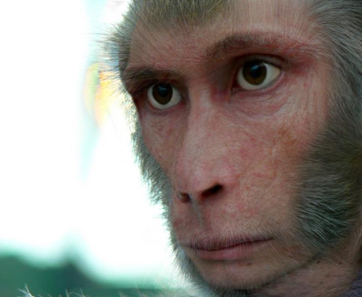 Сенсация: шимпанзе в Африке придумали какого-то идола  и ему молятся