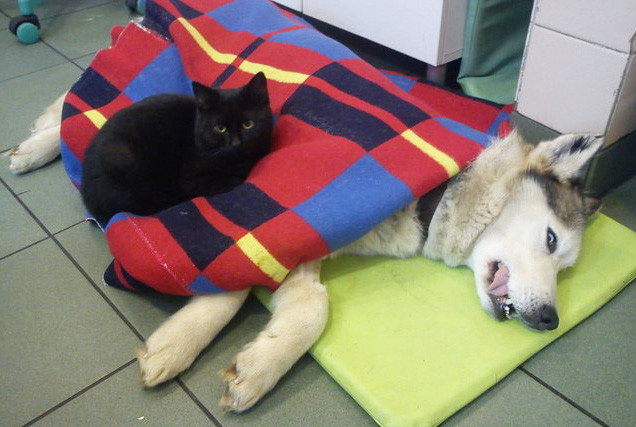Самые необычные котики на планете животные, книга рекордов гиннеса, коты, мир