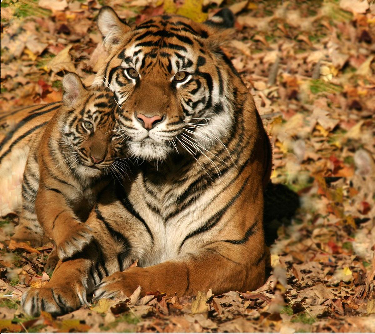 3 марта - Всемирный день дикой природы!
