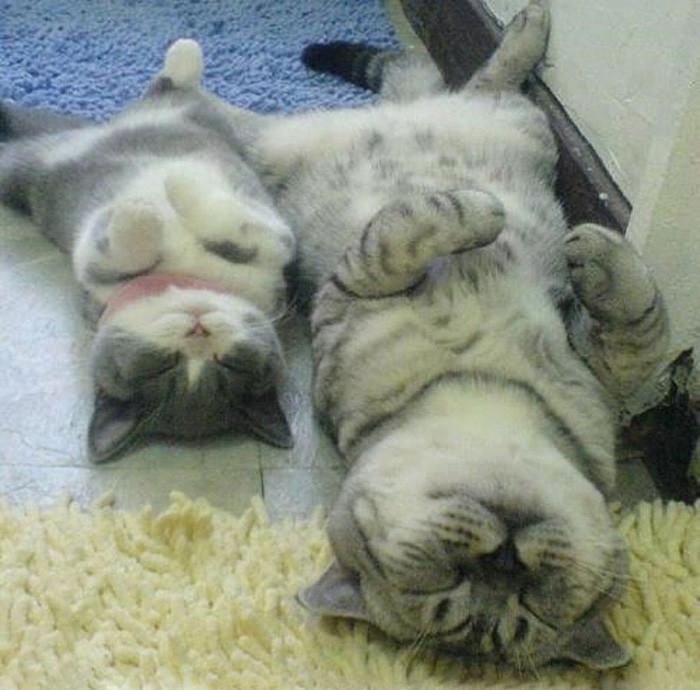 5. Сладкие сны котенок, кошка