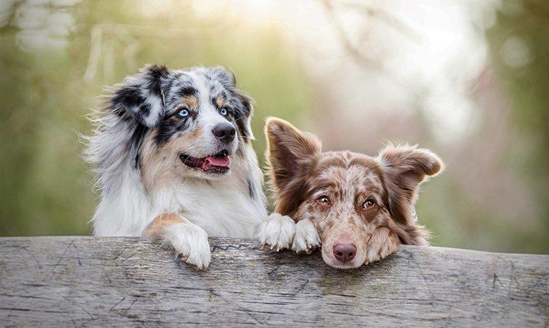 Умеют ли собаки читать мысли