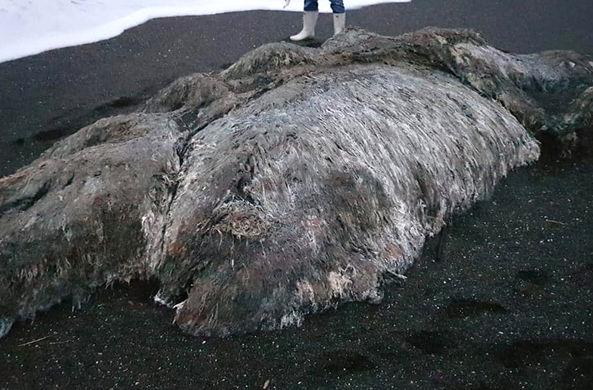 На Камчатке нашли необычное волосатое морское животное