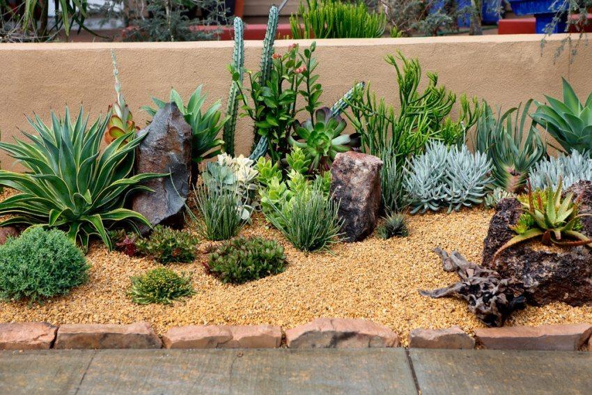 Вдоль ограждения высажены кактусы и суккуленты
