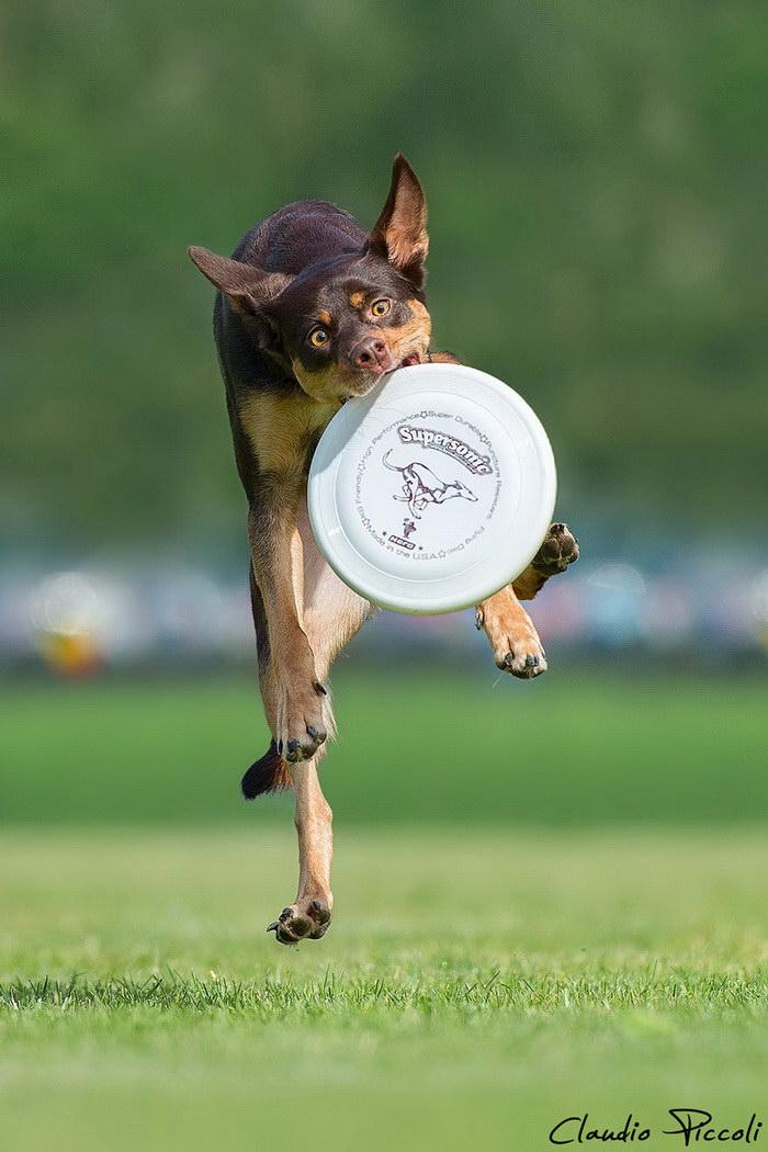 Летающие собаки в фотография…