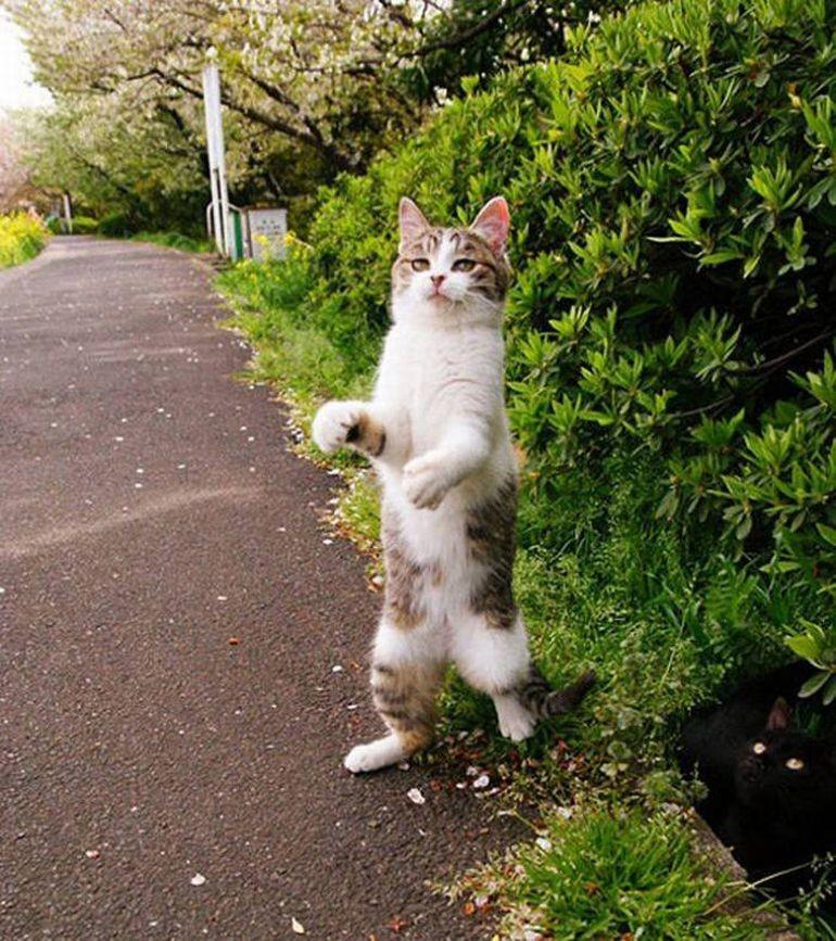 lolcats80 100 лучших фотографий кошек всех времен и народов