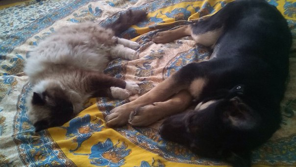 Бездомные кошка с собакой подружились и обрели нового хозяина