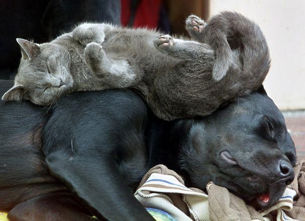Собака в качестве подушки