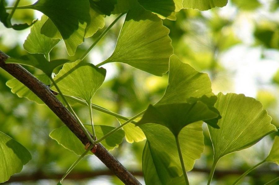 4 вида трав, которые защищают ваш мозг от тревоги, депрессии и болезни Альцгеймера
