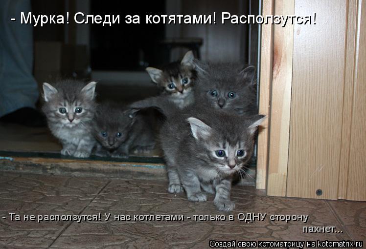 Котоматрица: - Мурка! Следи за котятами! Расползутся! пахнет... - Та не расползутся! У нас котлетами - только в ОДНУ сторону