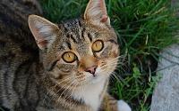 Любимые коте:)