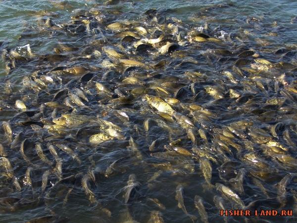 прогноз клева рыбы в нытве на пруду