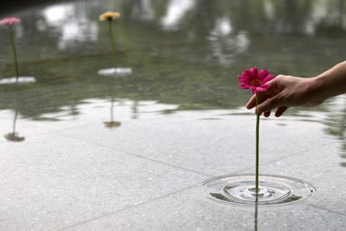 Сажаем и срываем цветы прямо из луж