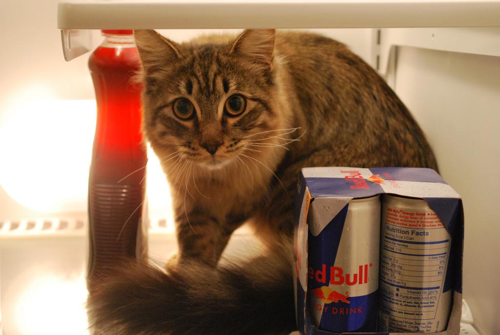 Коты в холодильниках