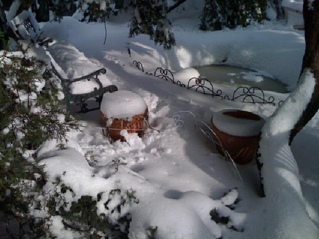 Календарь садовода и огородника: что необходимо сделать в феврале —