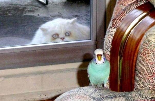 Печальная история о коварном попугае и кошачьем обмороке