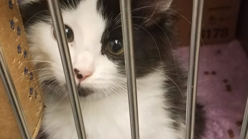 Они пришли в приют за котенком и… Там случилось чудо!