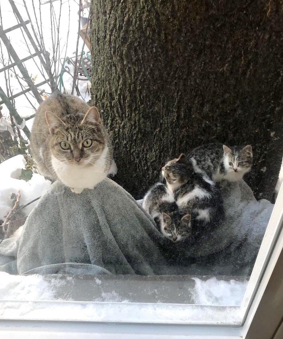 Выглянув в окно, девушка уви…
