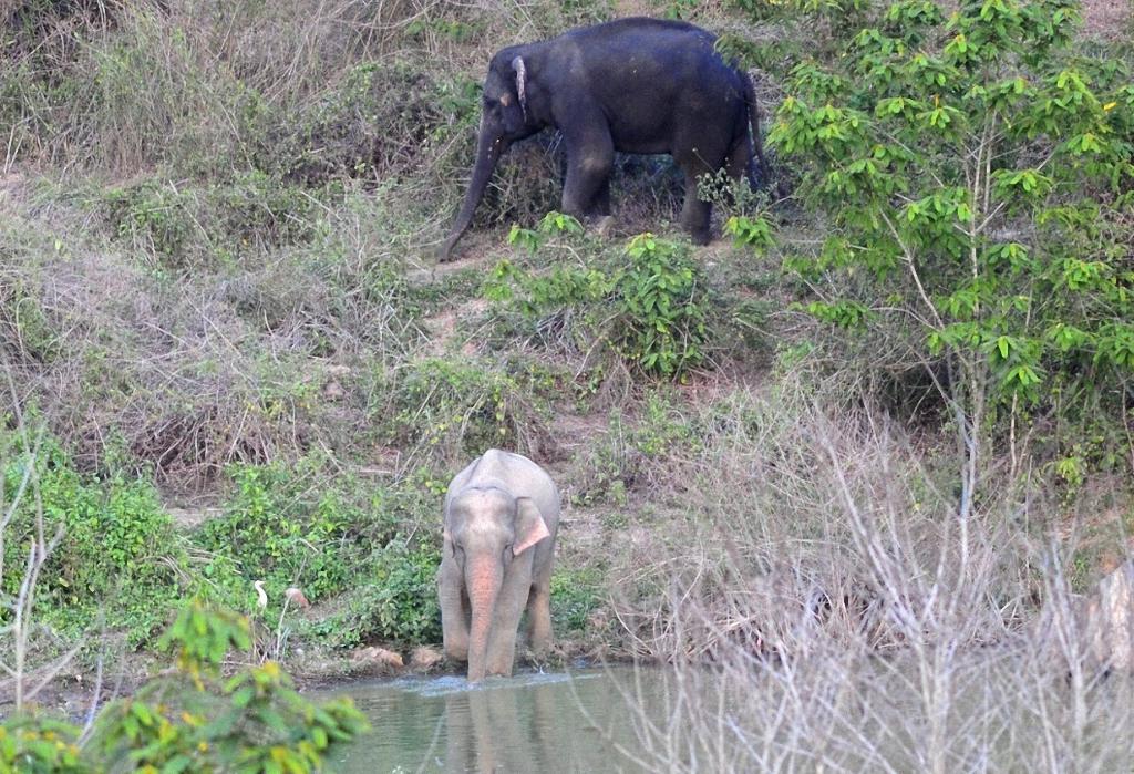 Украшения для слонов фото