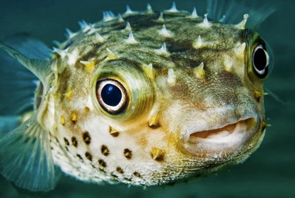 Самые ядовитые подводные обитатели