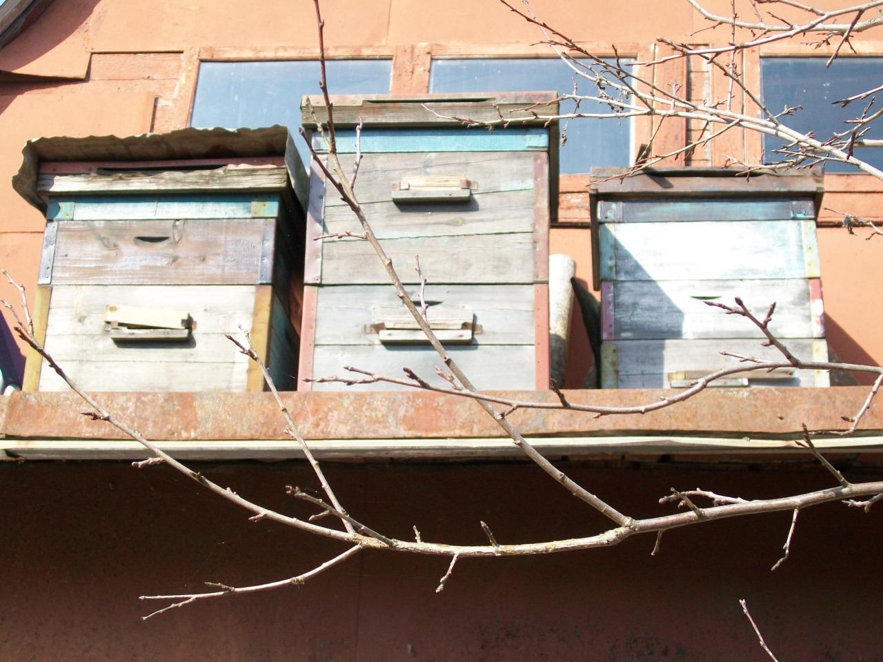 Пчеловодство на даче.