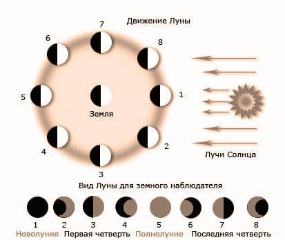 лунный календарь сбора лекарственных трав