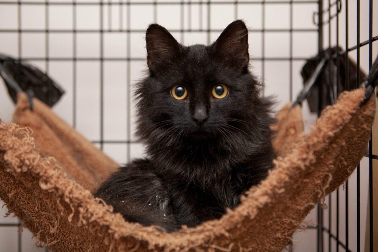 «Настоящие коты» Т.Пратчетта