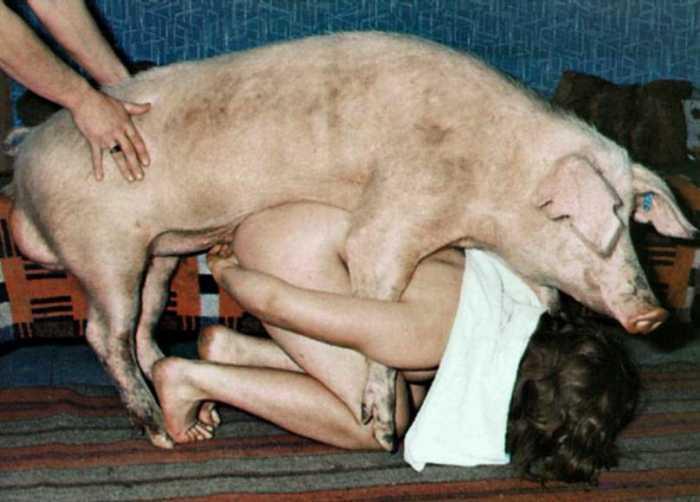 Порно со свиньёй.