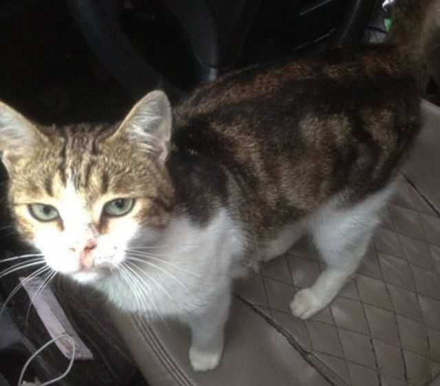 Полиция поймала кота-наркокурьера