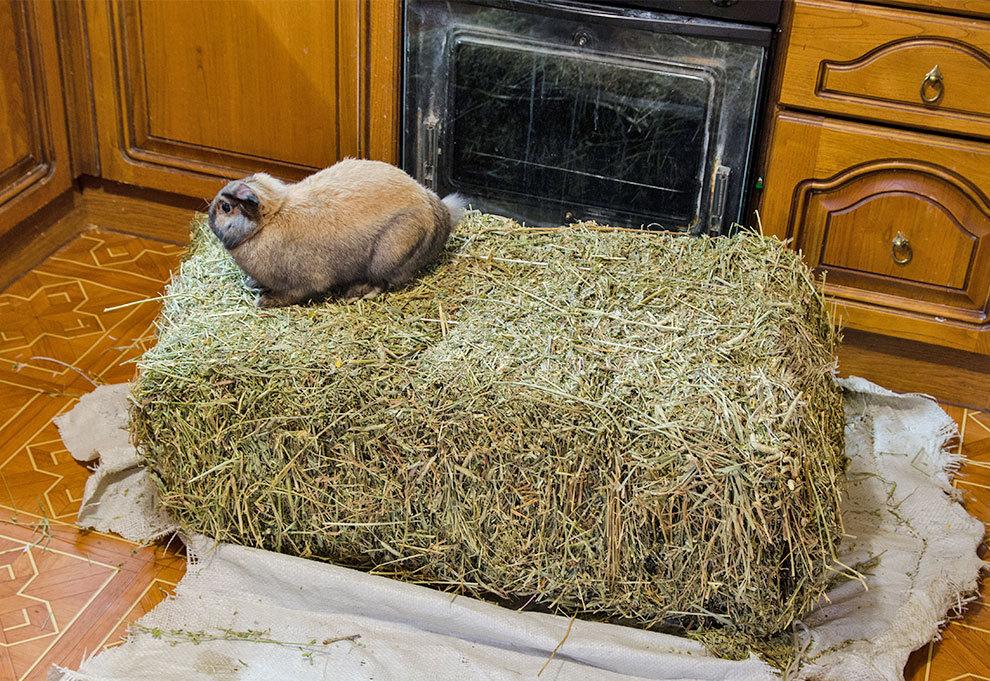 За милым кроликом: 15 фото ушастых проказников, радующихся весне