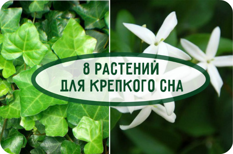 8 растений, которые сделают ваш сон крепким