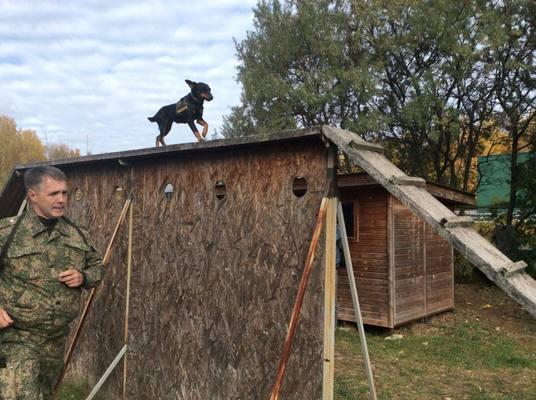 Нюх на контрабанду: работа служебных собак на таможне