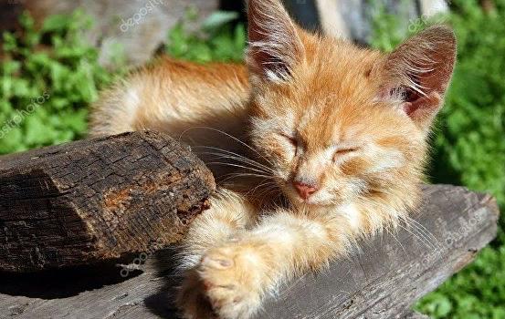В Майкопе выбрали имя котенку, благодаря которому был погашен долг приюта