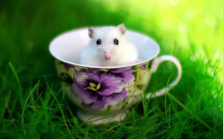 Милейшие хомяки — мимими зашкаливает! животные, хомяки фото животные мимими