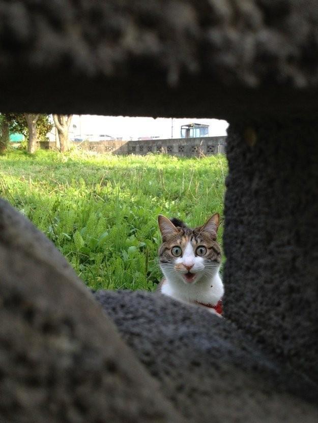 lolcats61 100 лучших фотографий кошек всех времен и народов