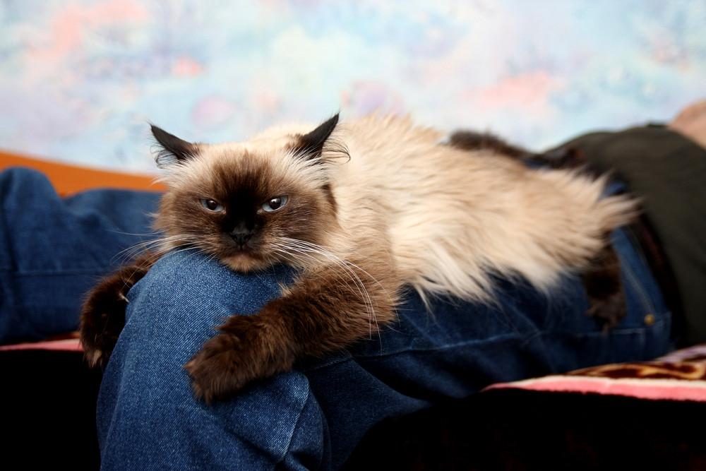 16 открыток истинной истины о котах и их владельцах