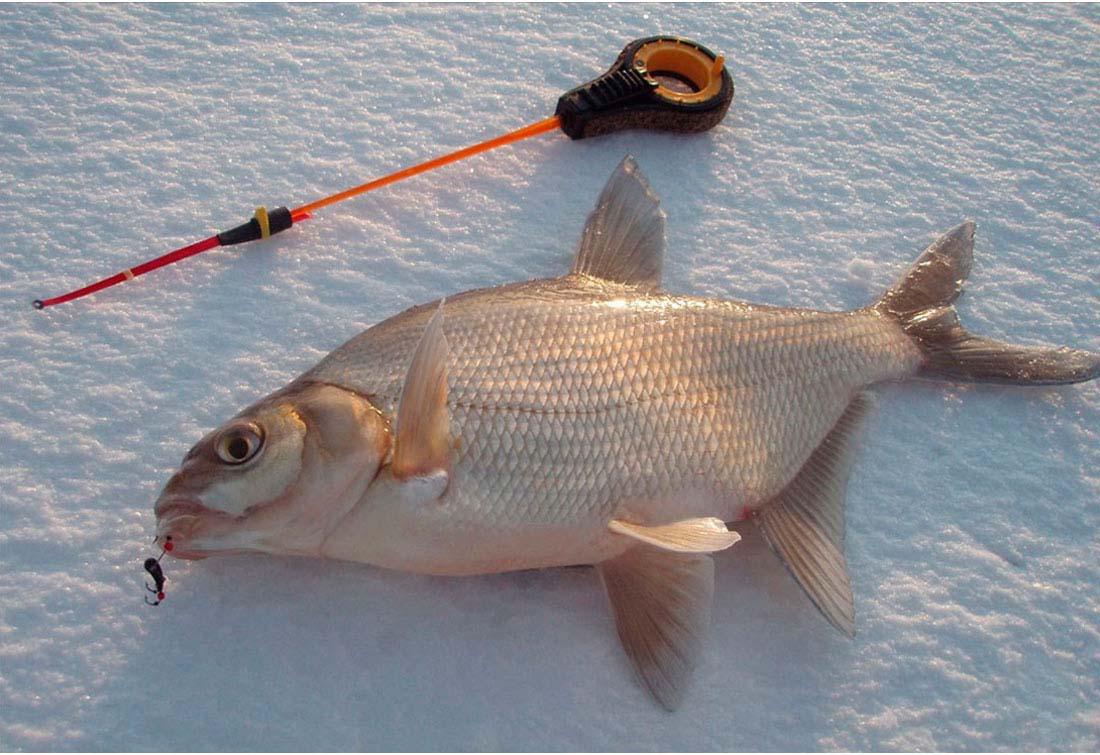 ловим рыбу без насадки
