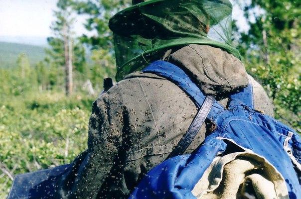 8 убийственных ароматов против комаров. Скоро пригодится