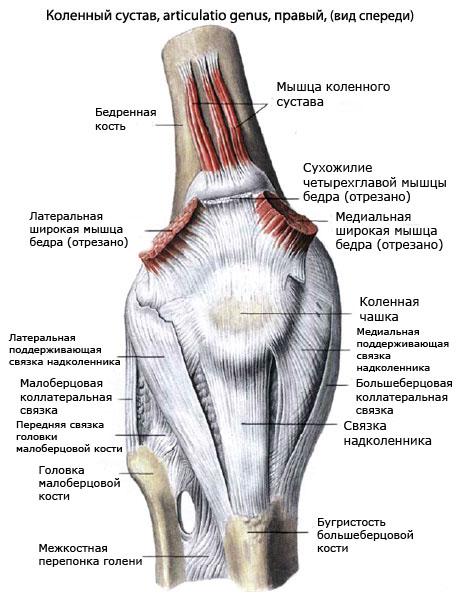 спайки мышц в коленном суставе