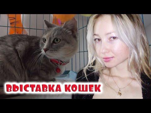 Выставка кошек!
